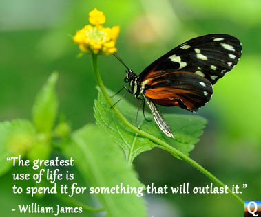 Butterfly on flower with quote about life.